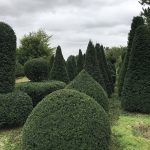 Taxus Topiary allgrowth o