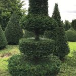 Taxus Topiary allgrowth n