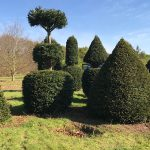 Taxus Topiary allgrowth m