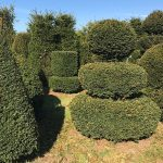 Taxus Topiary allgrowth l