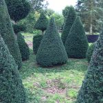 Taxus Topiary allgrowth k
