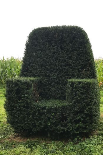 Taxus Topiary allgrowth 4