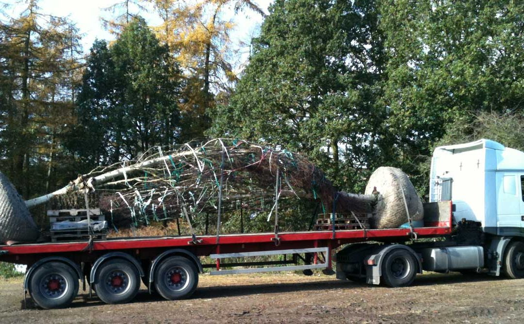 Big trees | And we mean BIG