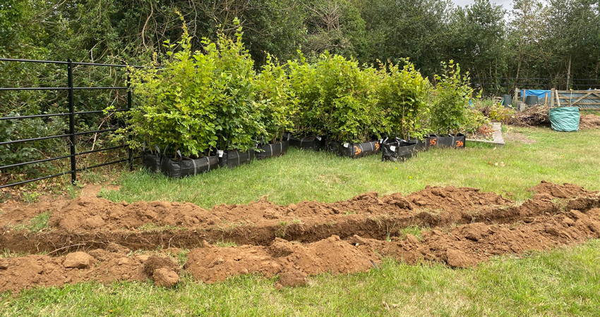 Ready to plant instant native hedge