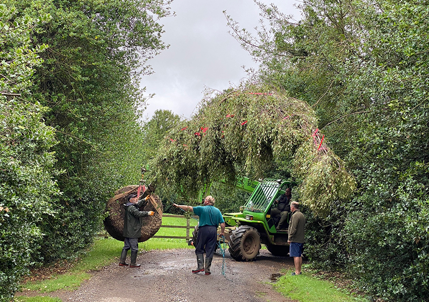 Tree delivery sorted