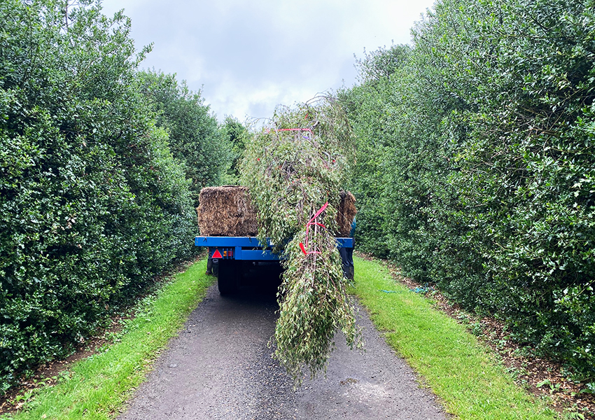 Large trees on their way