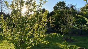Orchard sunset
