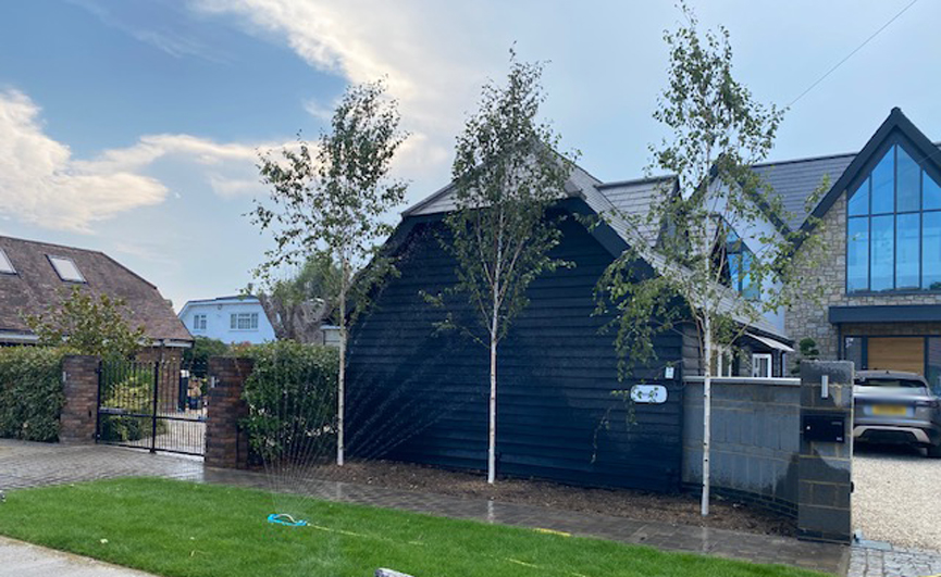 Broxbourne Riverside Pleached Trees Screening